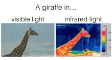 Giraffe_IR_visible